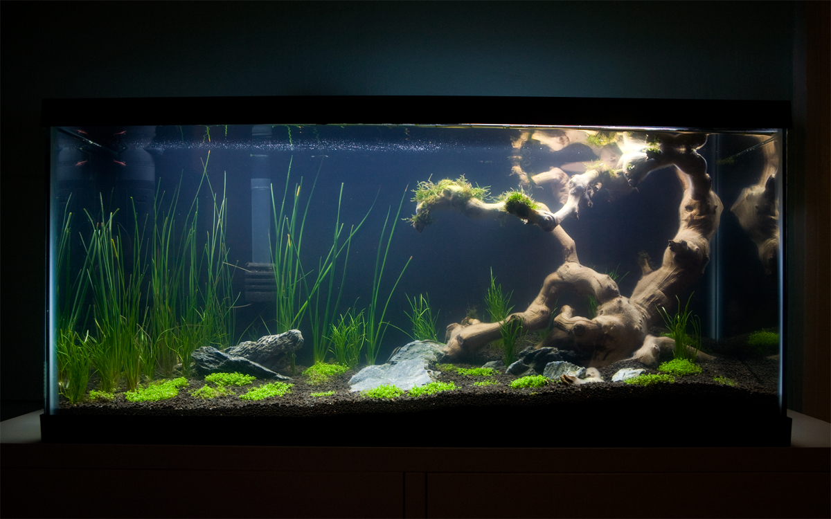 10 gallon fish tank journal 10 gallon planted tank Thirty gallon fish tank